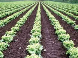 Horticulture of Haryana - Haryana PCS Exam Notes