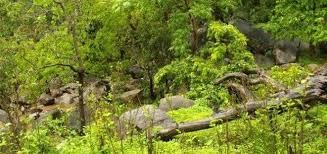 Vegetation of Haryana